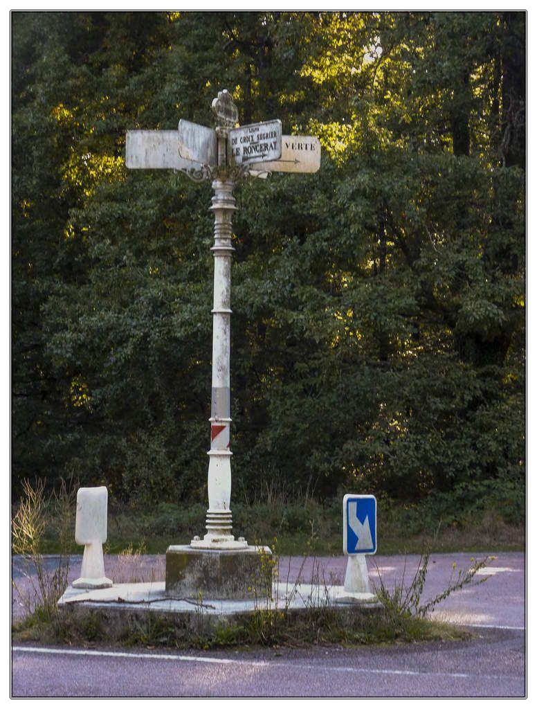Forêt de Bercé -Sarthe