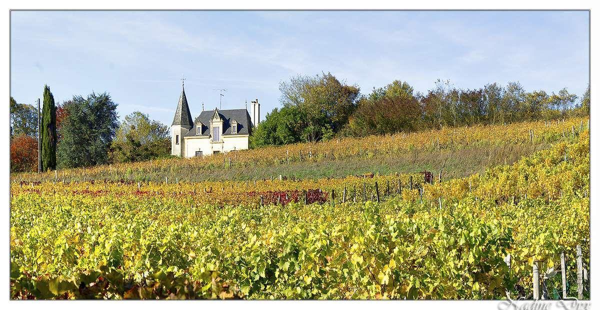 Vignoble de Jasnières - Sarthe