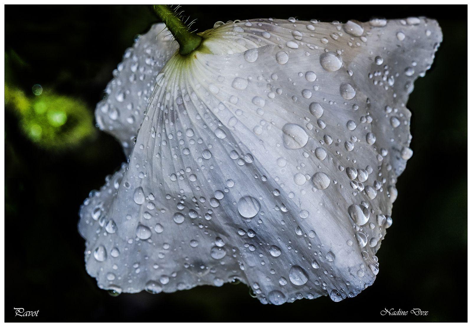 Au coeur des fleurs + macro