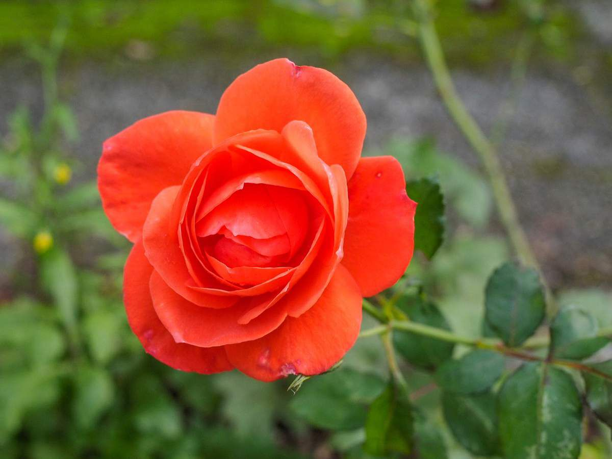 Fleurilège