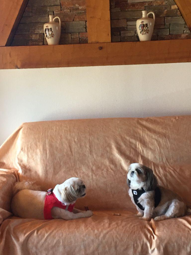 Que ce soit Fréjus ou l'Alsace, il y a toujours un canapé pour les fifilles !