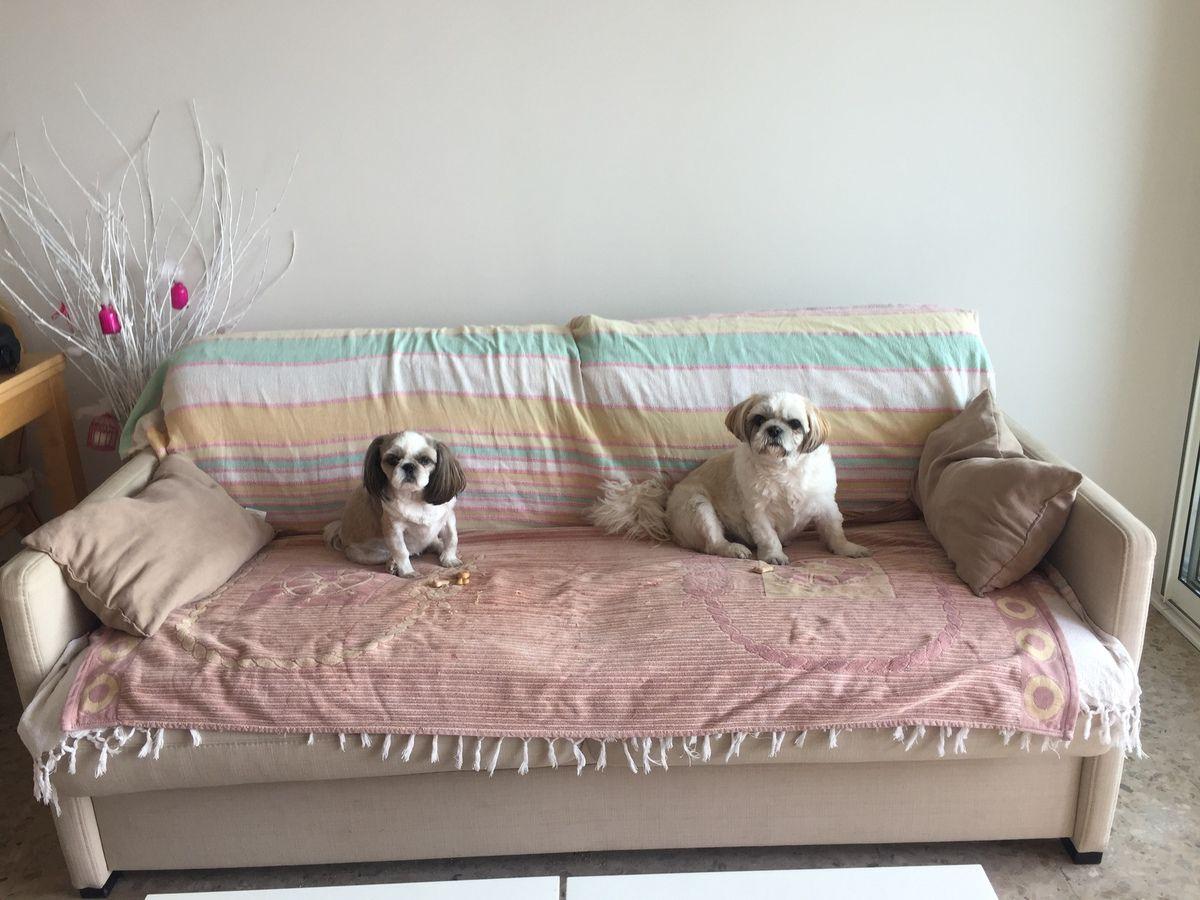 L'arrivée ! elles retrouvent aussitôt leur canapé !