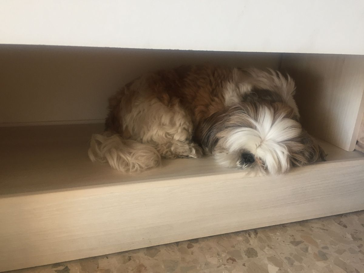 Hevy a retrouve son endroit préféré, la niche dans le placard !