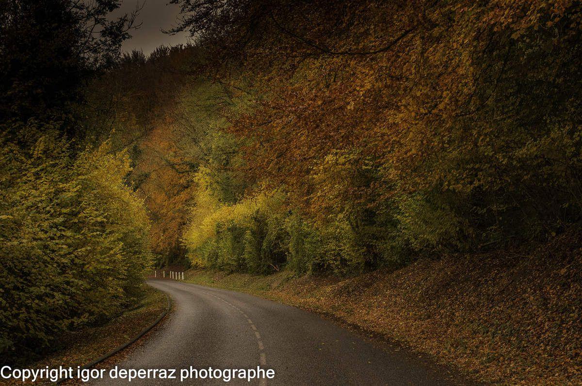 la forêt de Fairuz en automne