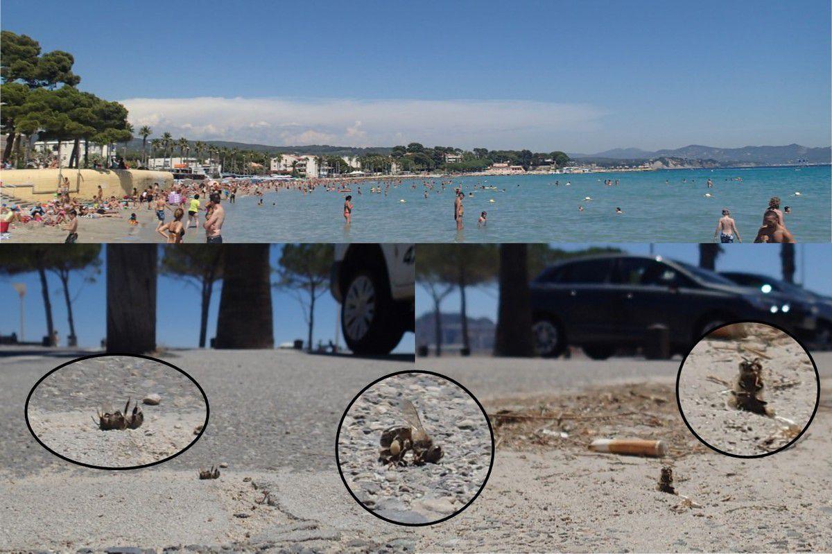15h30, les plages se sont remplies, à l'horizon une aviocorde, non annoncée par Météo France qui ne s'intéresse pas ouvertement aux nuages de culture engendrés par le trafic aérien. Sur les parkings et trottoirs proches des plages, des centaines de cadavres d'abeilles sur le dos, en position d'effort pour se redresser ou autre.