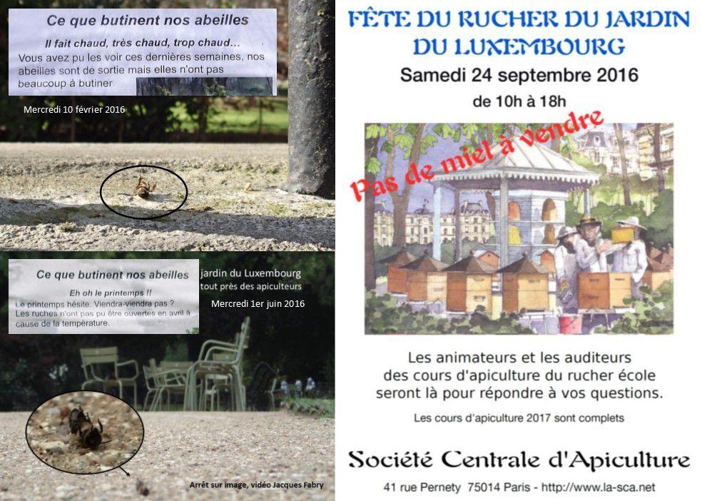 Pas de miel 2016 à vendre pour le célèbre rucher parisien du Jardin du Luxembourg. Les inscriptions aux cours d'apiculture 2017 sont cependant déjà complètes. Pour combien d'années encore ?