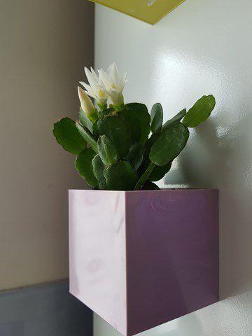 Petites plantes de la maison deviendront grandes...