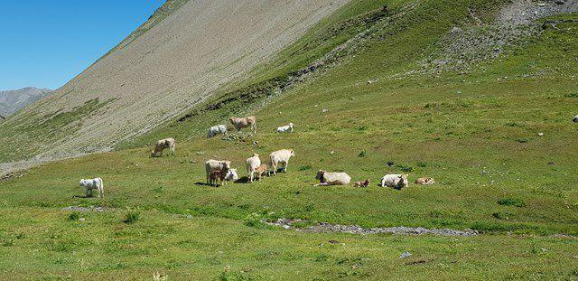 Road trip Alpes Août 19 - 3