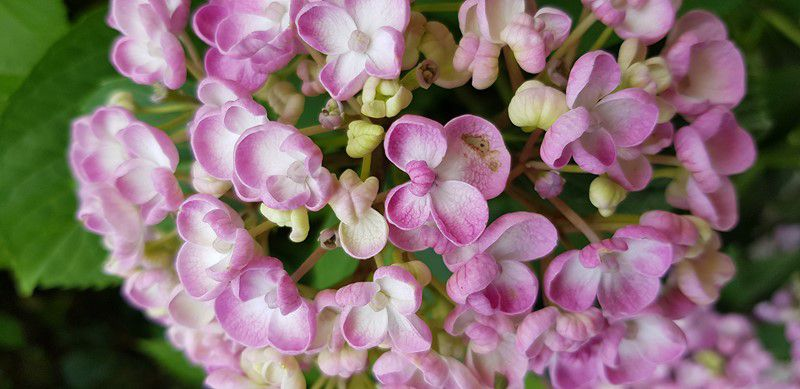 Mon jardin de fille :  Les légumes, les fleurs !!