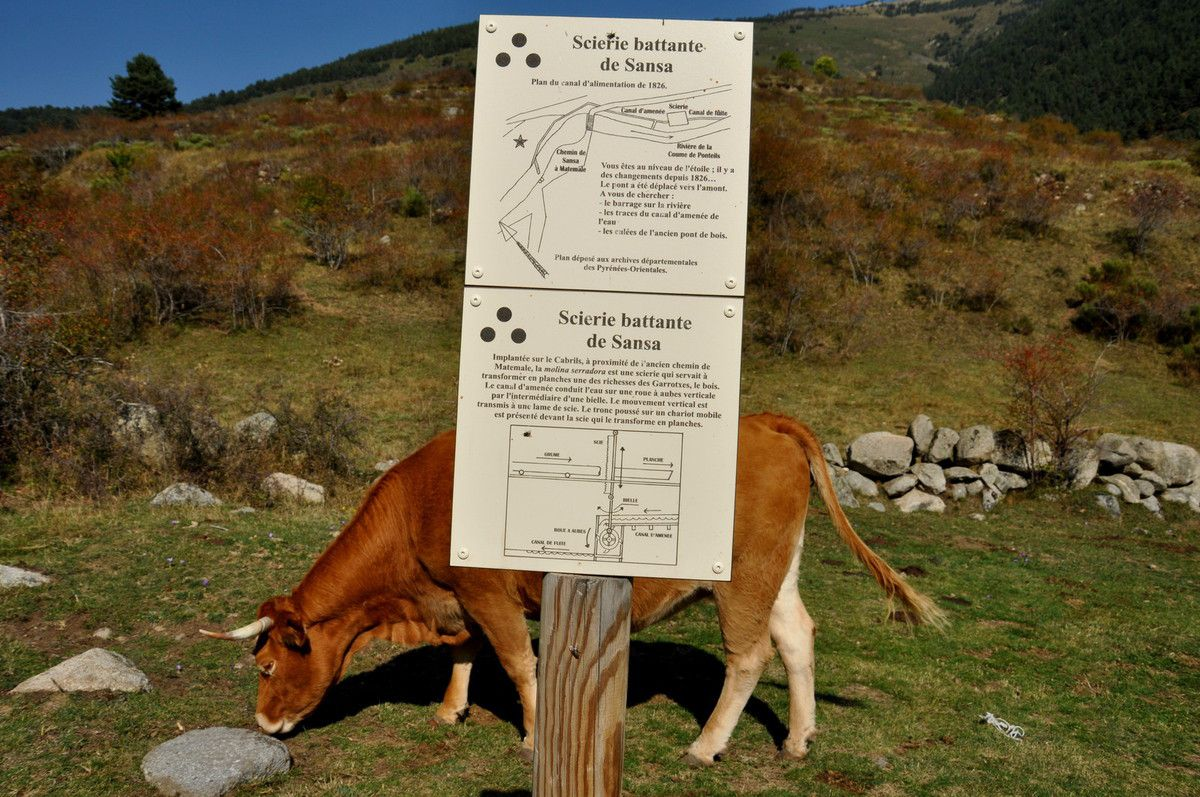 Excellent panneau et en plus la vache st sympa