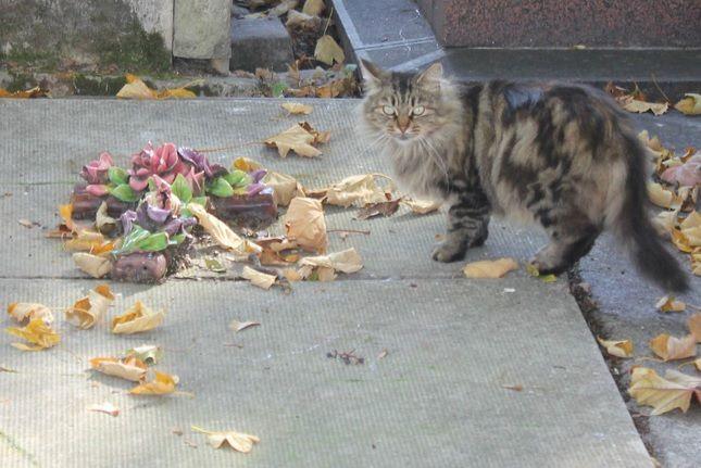 CLIQUER pour lire l'histoire des chats du cimetière de MONTMARTRE.
