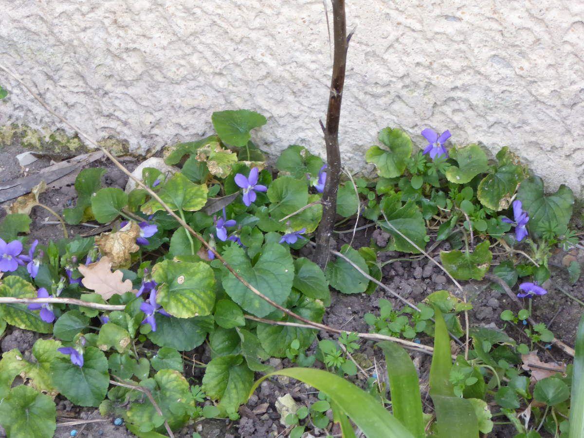 Quelques fleurs du jardin pour la ST VALENTIN.....
