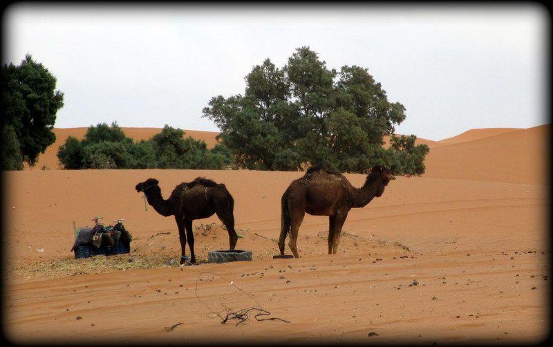 Détours du Maroc... le vaiseau du désert ..