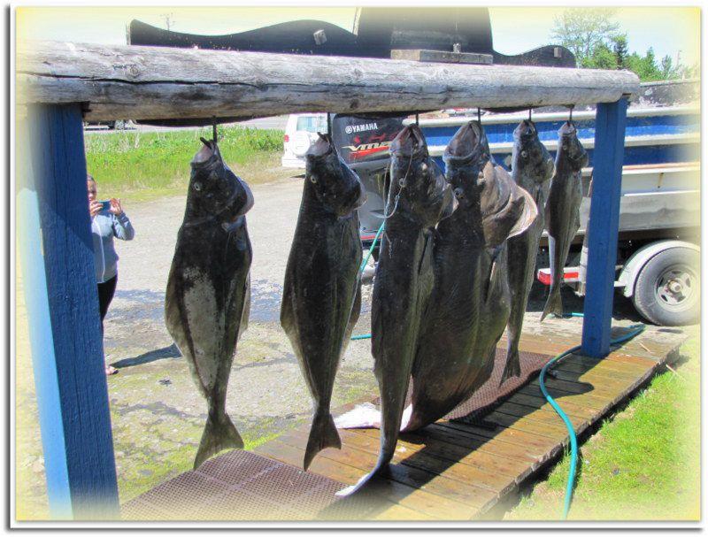 Safari Pêche ... à Anchor Point ..