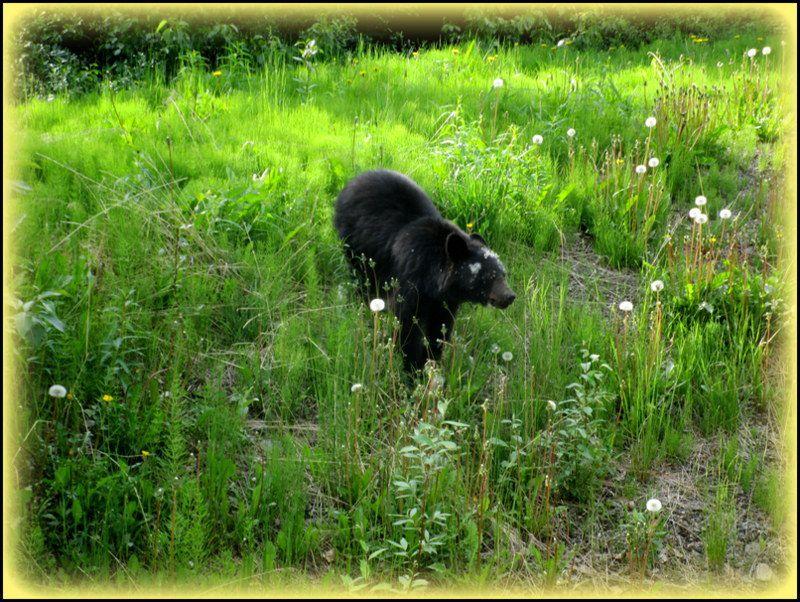 Bear stoppeur ....