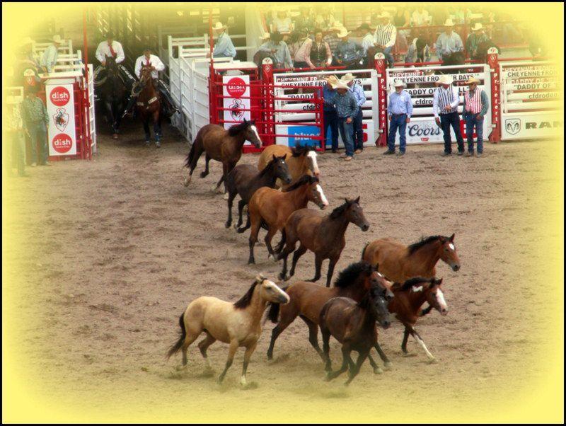 Cheyenne Frontier Days ....