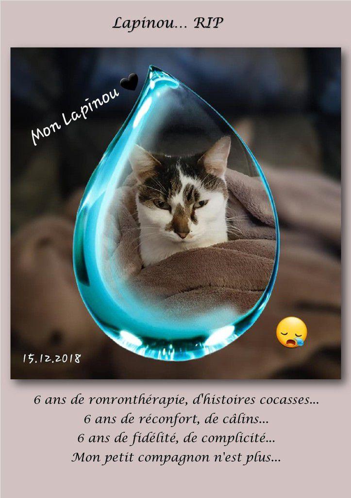 Lapinou... RIP...