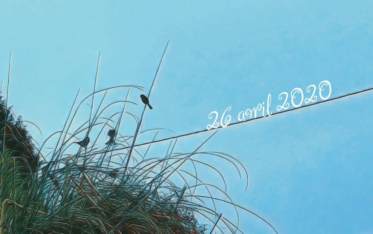 26 avril 2020