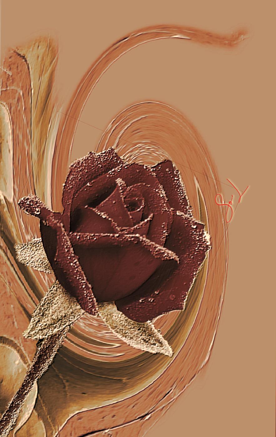 Mes roses #So'L