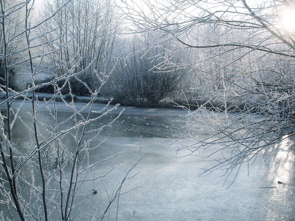 mon étang ce matin