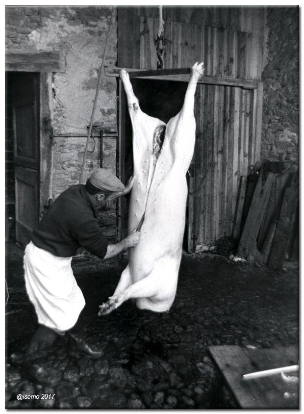 """Photographie : Le """"tue-cochon"""" en Aveyron..."""