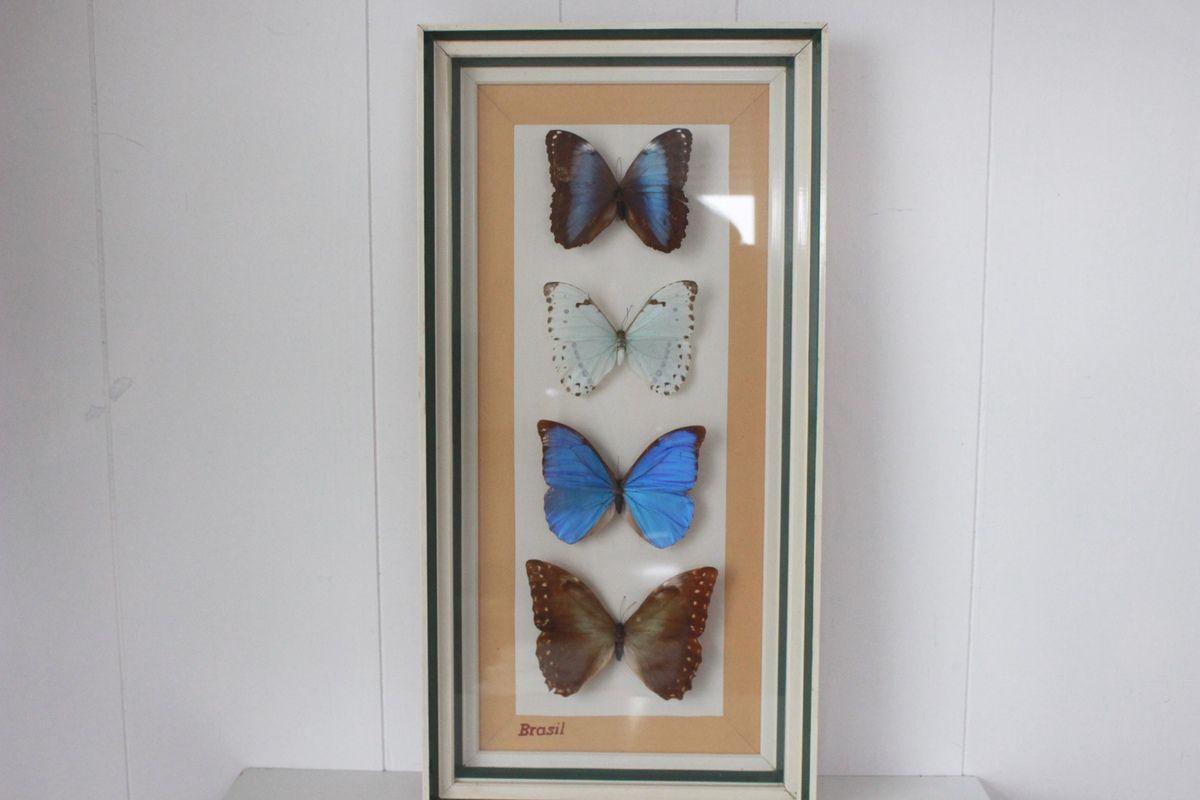 Grand tableau Papillons du Brésil Taxidermie Vintage - Années 70