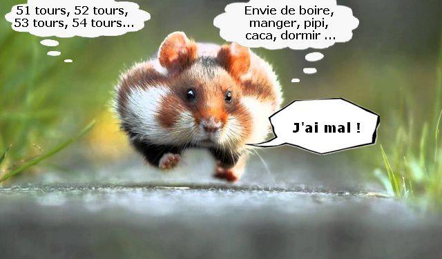 La vie des hamsters