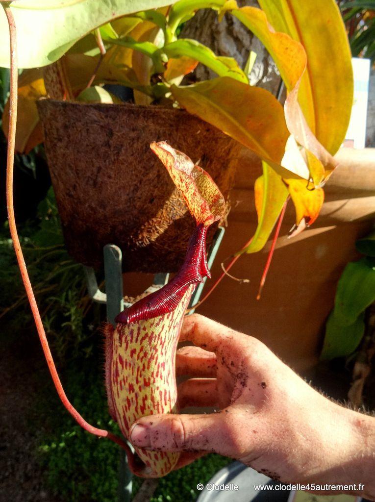 - ATELIER DU JARDIN DES PLANTES le 18 octobre - entretien gratuit des plantes carnivores