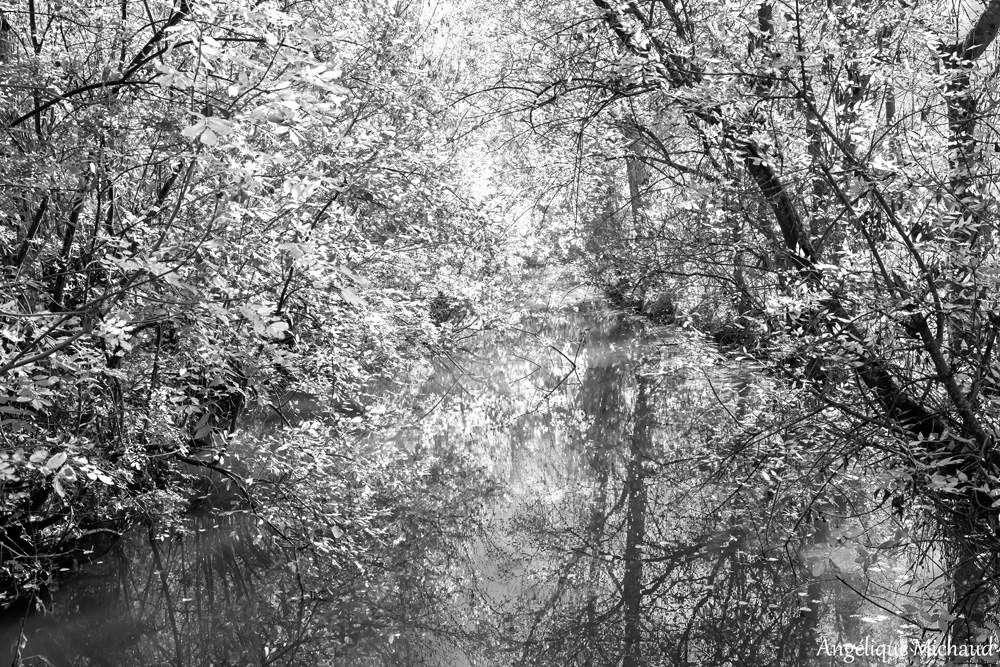 Une petite balade dans le Marais Poitevin...