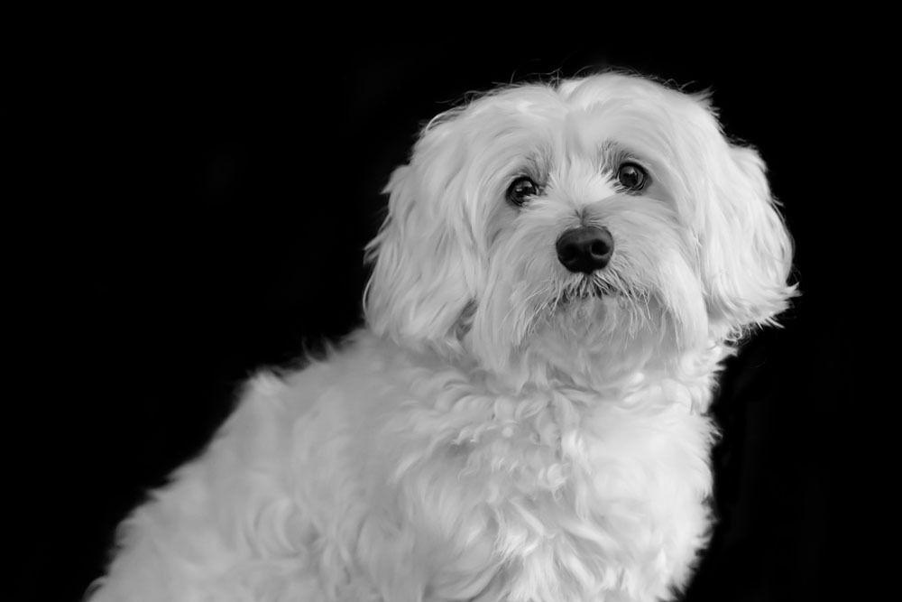 Séance photo portrait animaux / portrait chien du 22/10/19, photographe Bordeaux