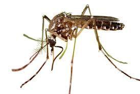solutions de lutte écologique contre les moustiques