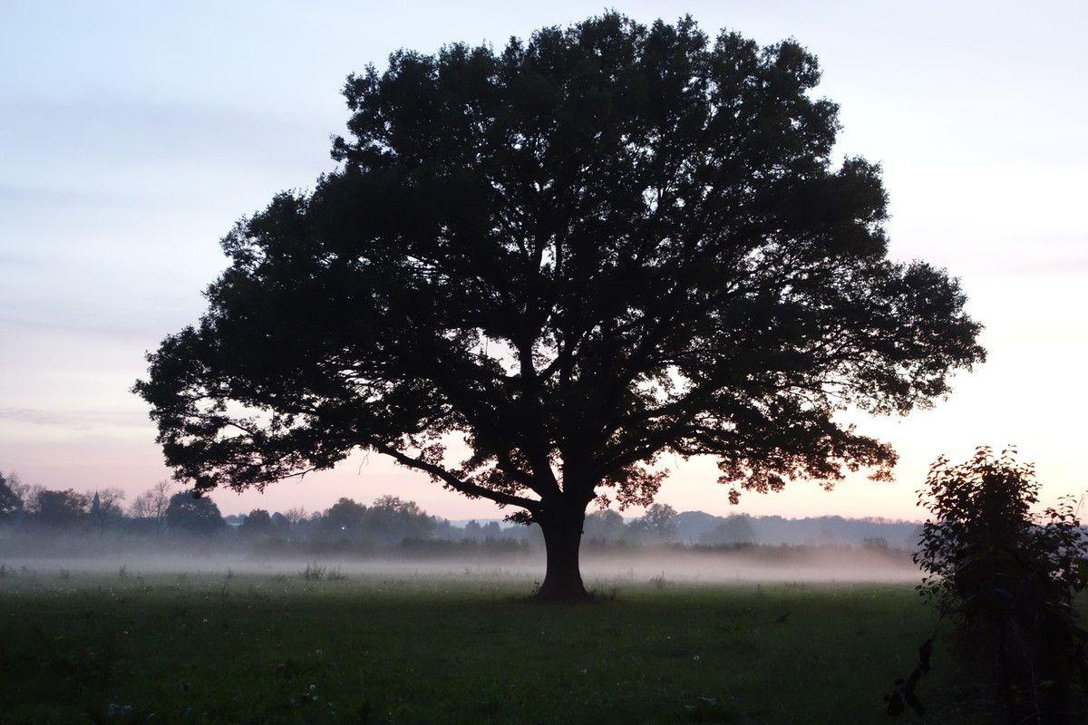 Haïkus de l'arbre