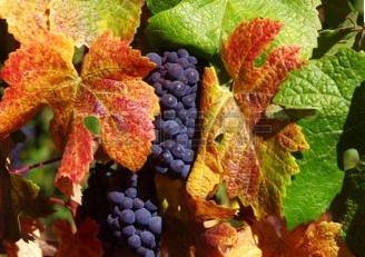 Le vin mordu. Luc Bérimont