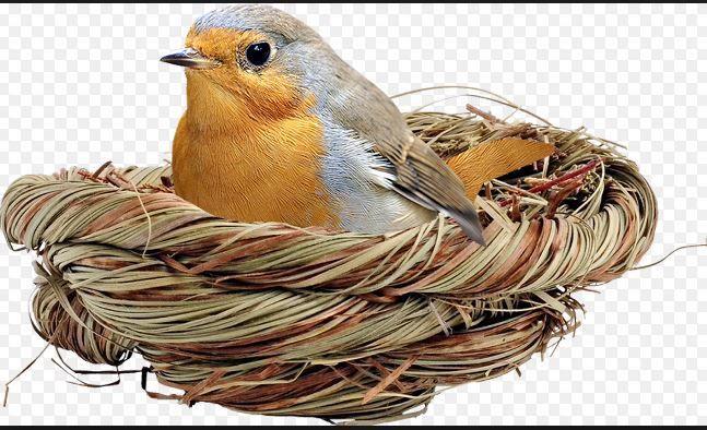 Oiseau . Emmanuel Levinas