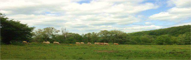 Au fond, la prairie de Launay, elle est sous bonne protection.