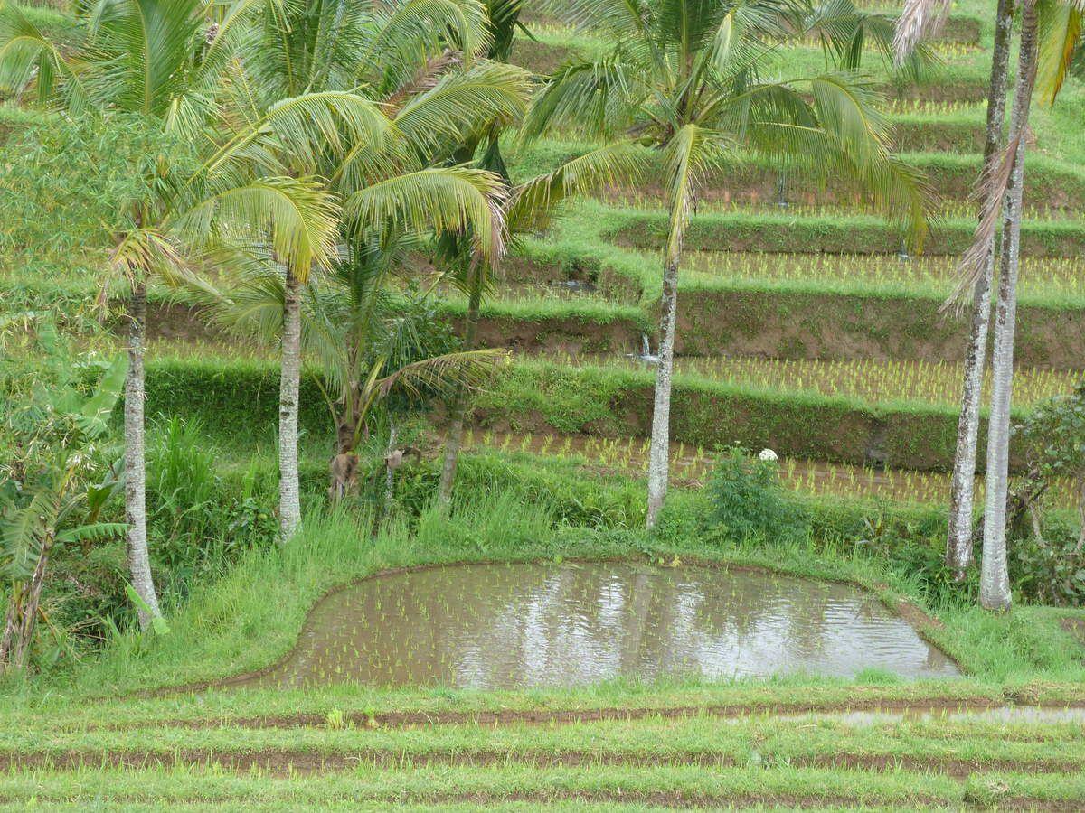 cartes postales de Bali