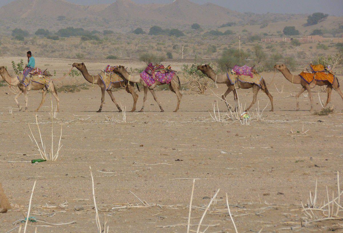 "JAISALMER, et le ""désert safari """