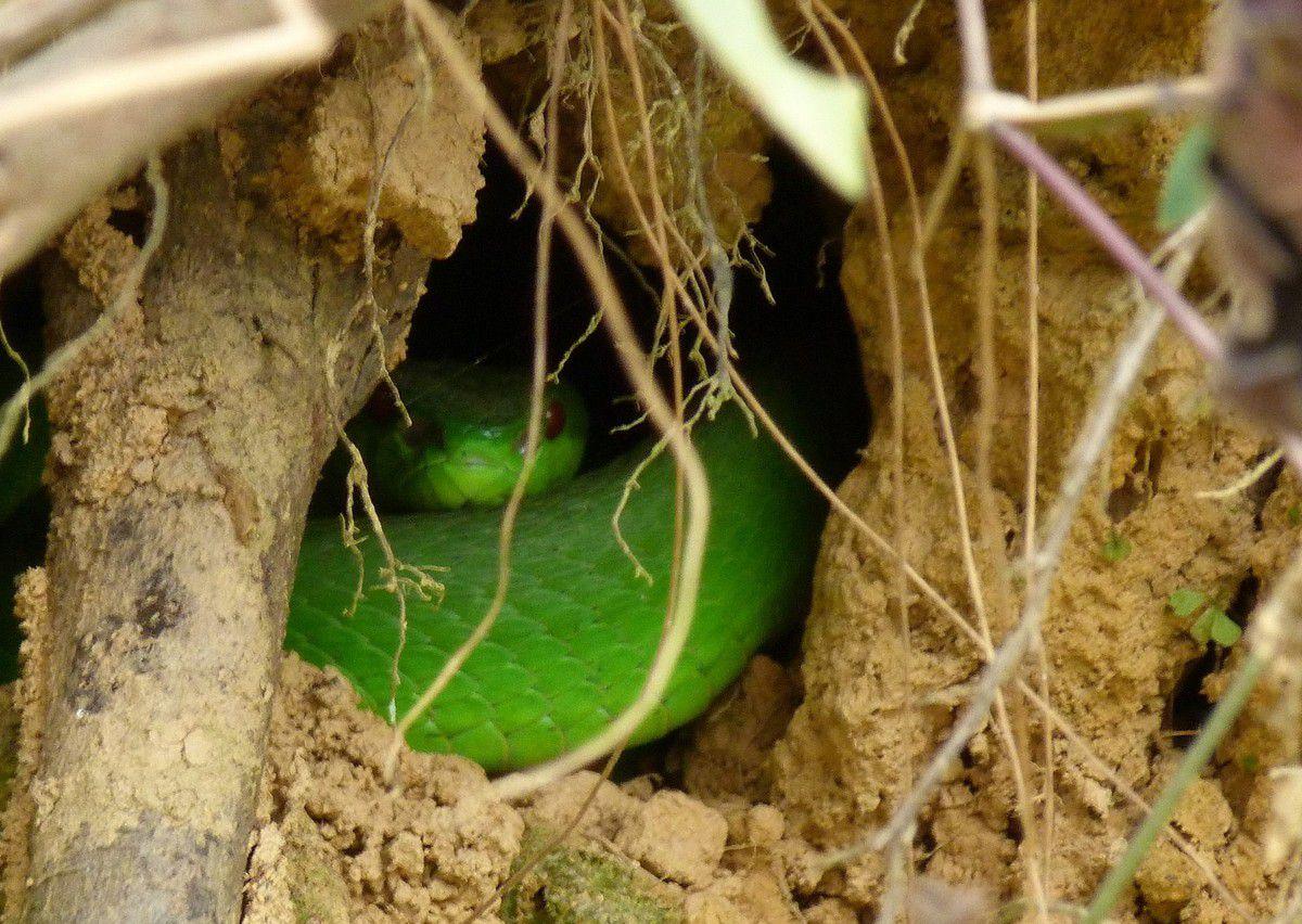 Muang Gnoy , pour 5 jours au vert