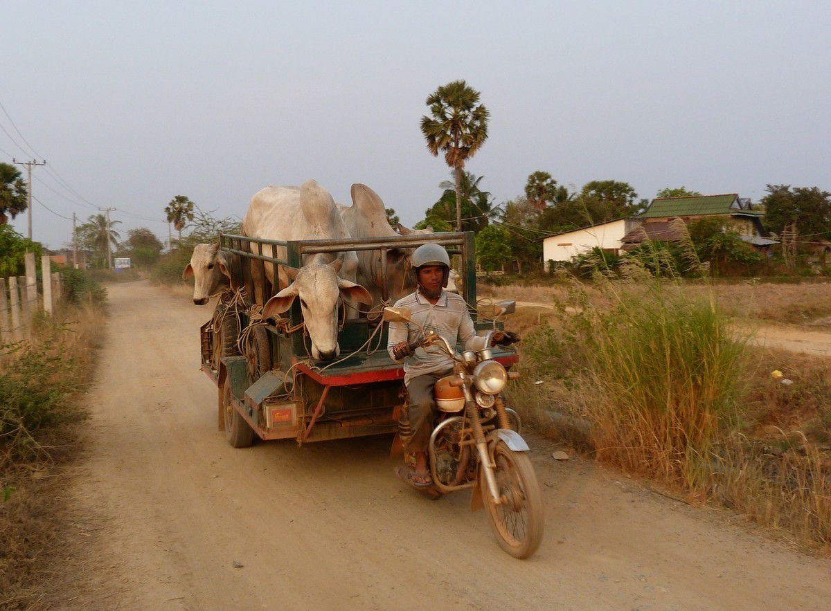Le Cambodge, en passant par Kratié, Phnom Penh et Kampot...
