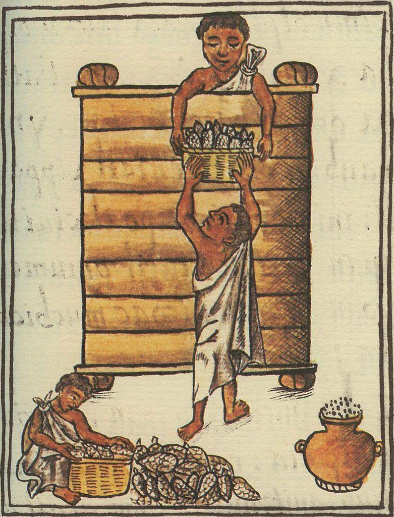 Ensilage du maïs par les aztèques, Codex de Florence, fin xvie siècle