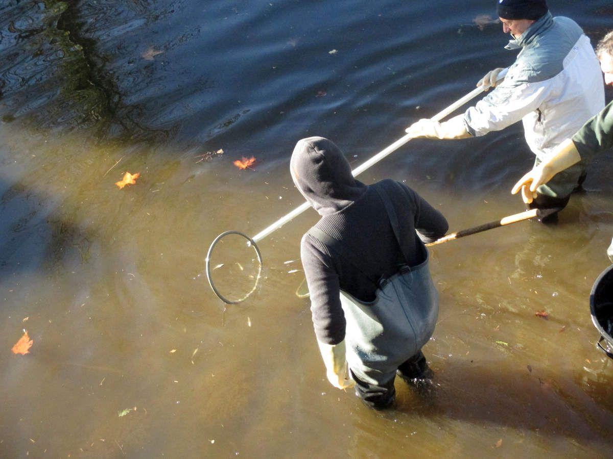 20171116 Pêche de sauvetage du Craponne