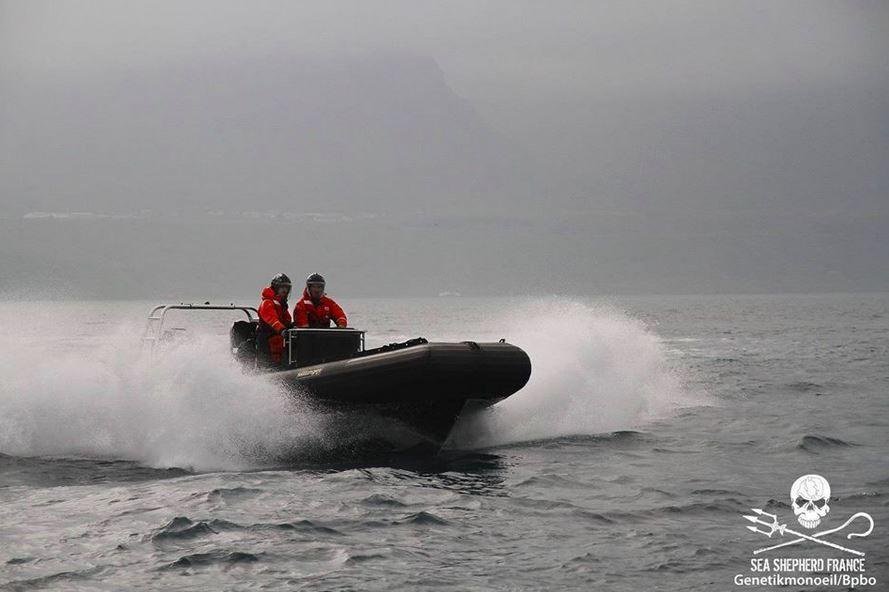La saisie des bateaux de Sea Shepherd aux Iles Féroé jugée illégale
