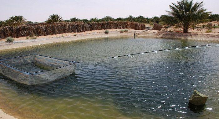 Le site officiel de la wilaya de Béchar الموقع الرسمي لولاية بشّار