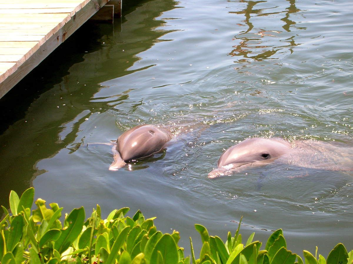 Dolphin Research Centre
