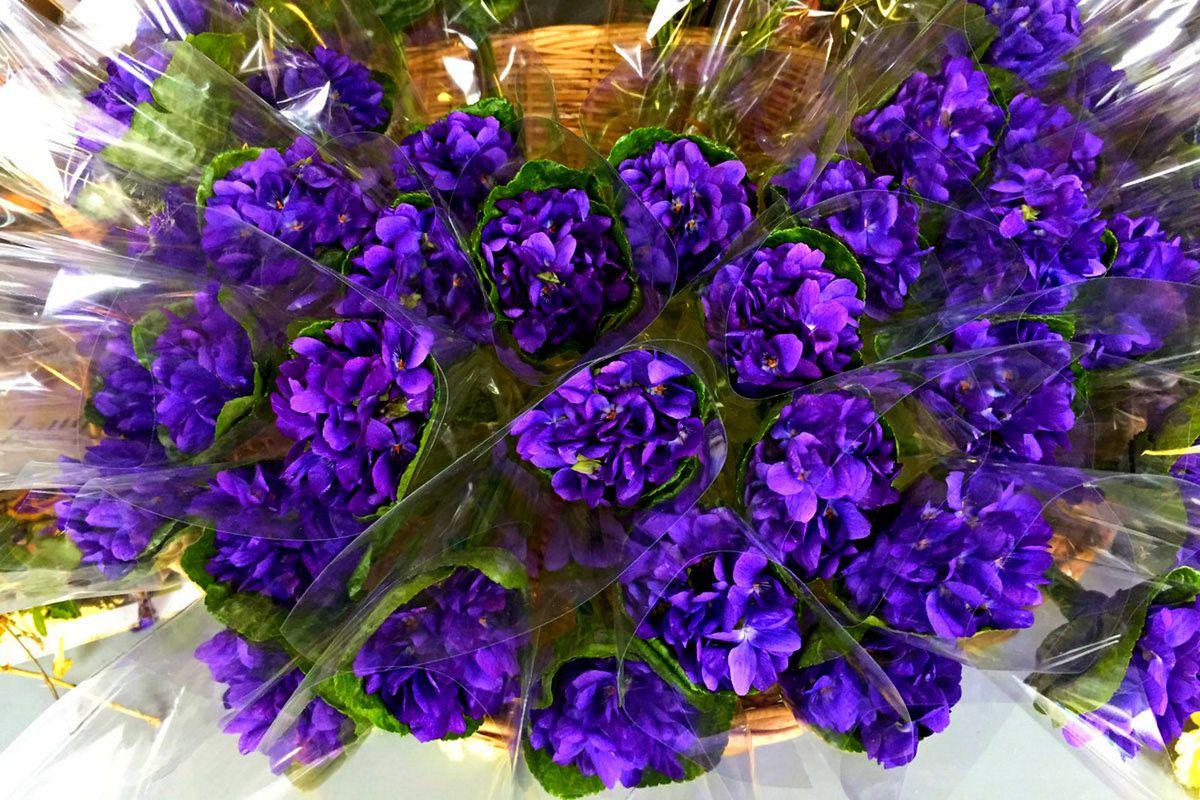bouquets de violettes