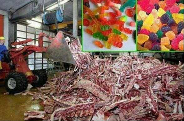 La gélatine dans les bonbons 100% porcine!?
