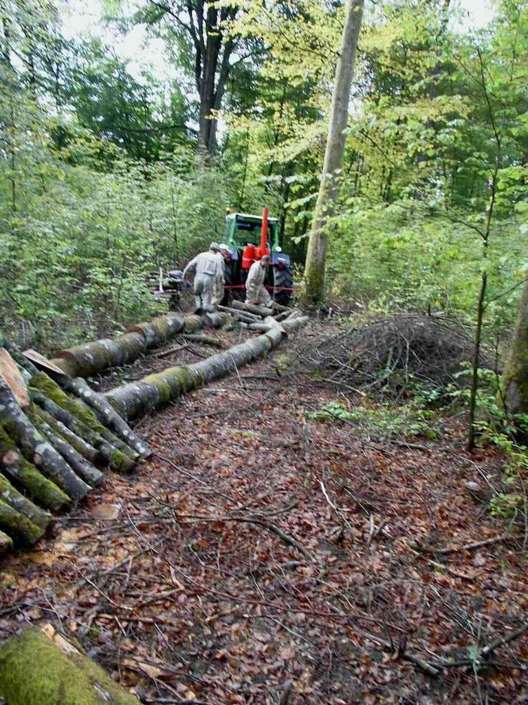 Une équipe est à la fendeuse de bois. L'autre tronçonne les buches par bouts de 1 mètre.