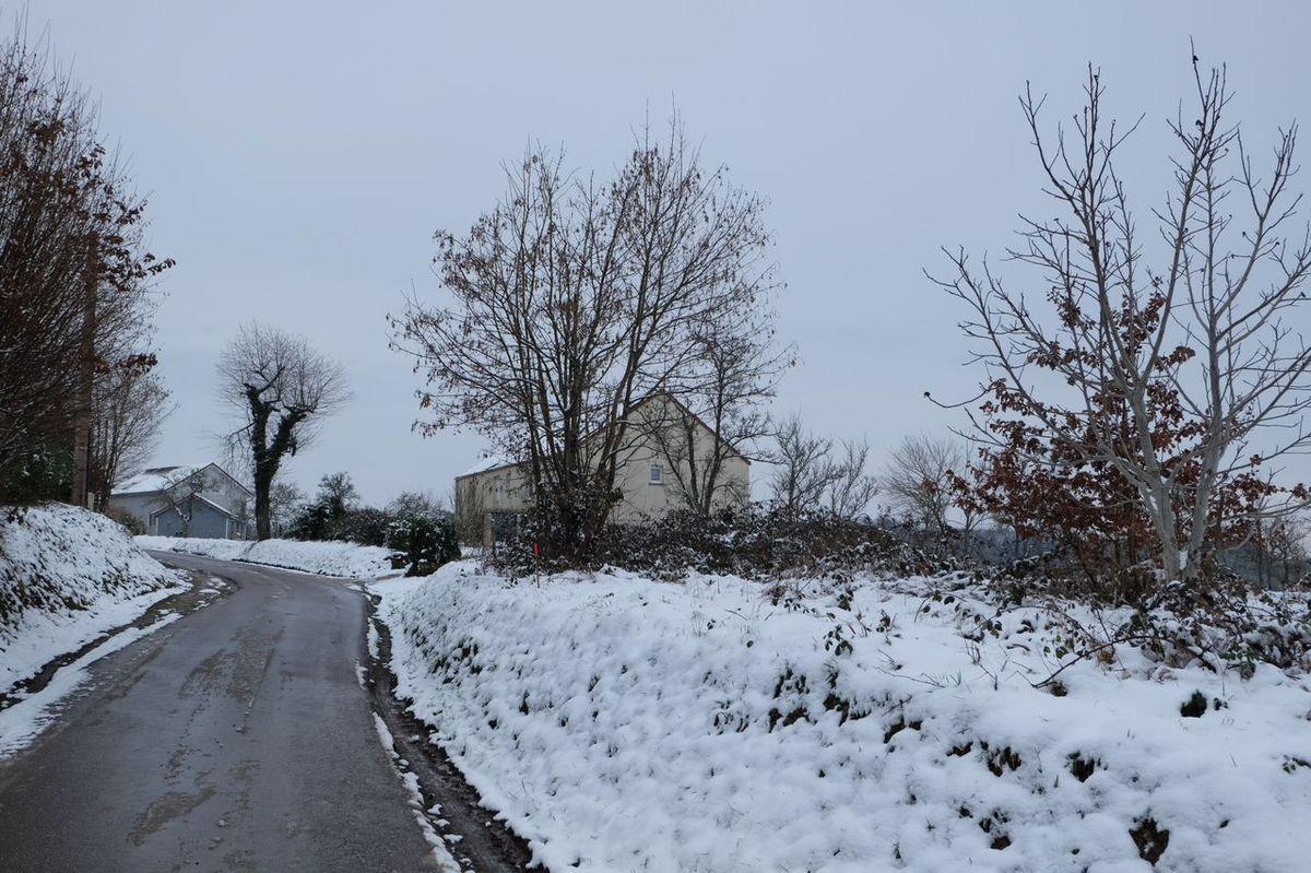 Les Bouleaux en hiver