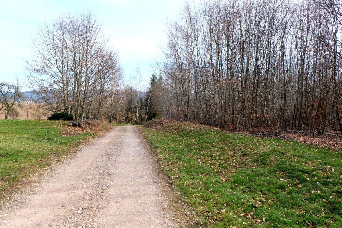 Au débour d'un chemin ou dans une clairière vous croiserez des fées dans les bois de Les Voivres