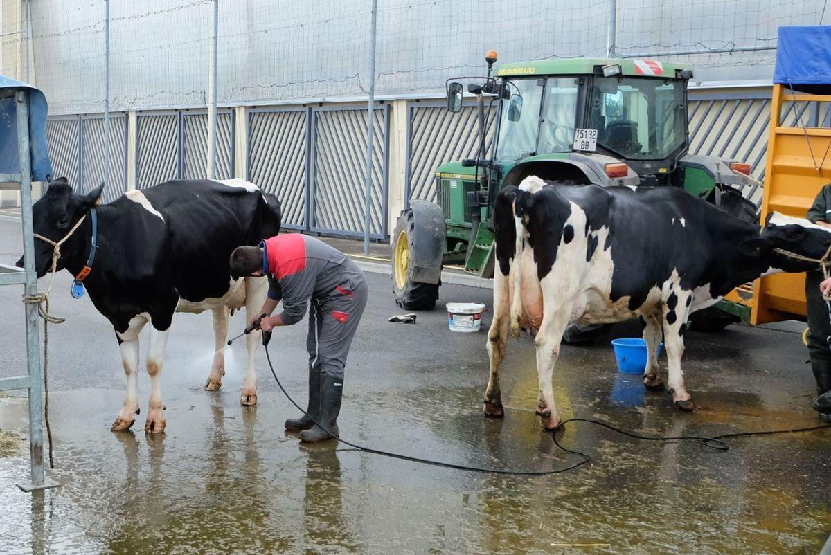 Le comice agricole de Xertigny